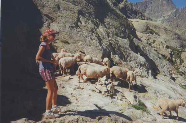 randonnee-mercantour-mouton